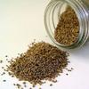 Семена сельдерея (Celery seed)